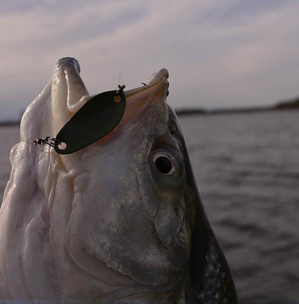 Tavaszi balinok-Horgász magazin | Horgász Online Webáruház