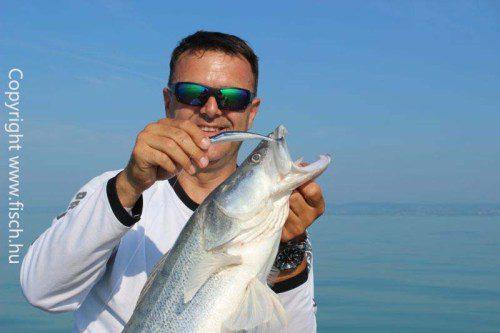 Balatoni Sárkányok | HorgászMánia friss horgász hírek