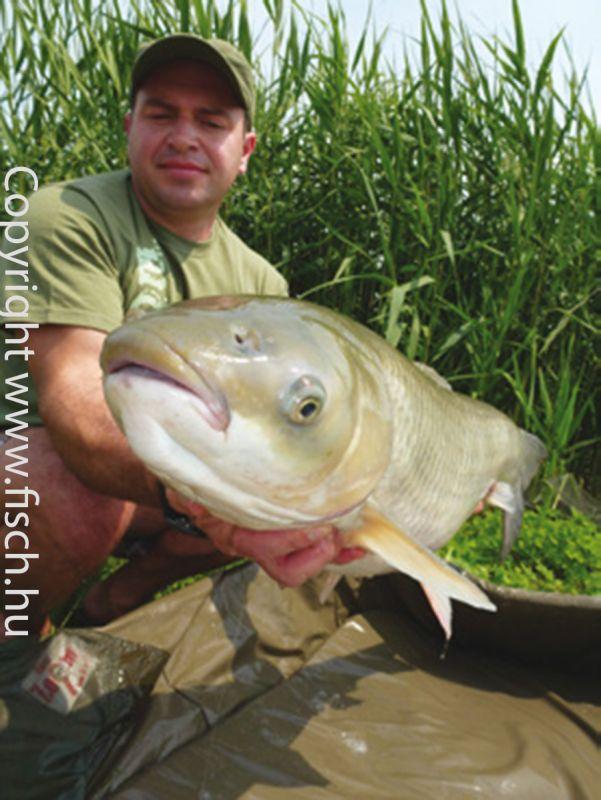 Az amur horgászatának módszere. Részletes leírással, tippekkel, trükkökkel! Horgászonline webáruházban rengeteg amur csalit talál!