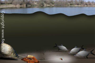 Ne dobd ki a csontibábot! | Horgász Online Webáruház