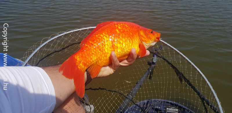 Szuper Akciós horgásztermékek hatalmas választéka, most a Szuper Akció oldalon!