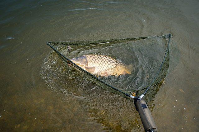Halvédelem-Horgászonline webáruház