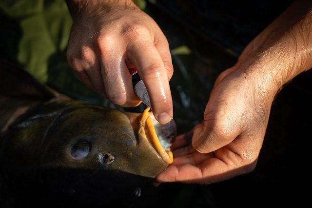 Halvédelem Carp Expert módra! | HorgászMánia friss horgász hírek