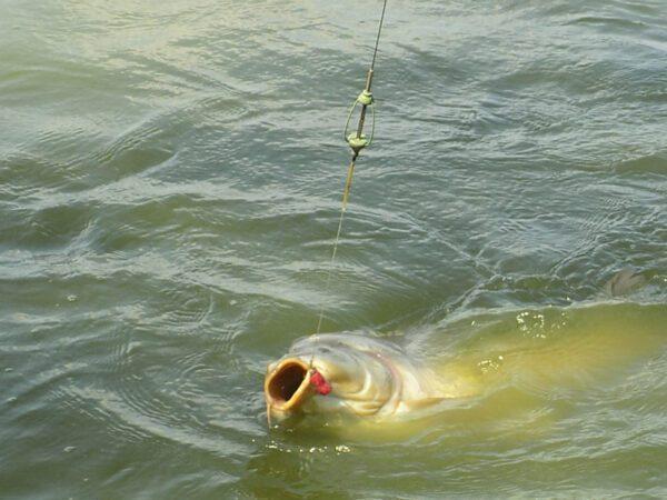 Methoddal kapitális halakra | Horgász Online Webáruház